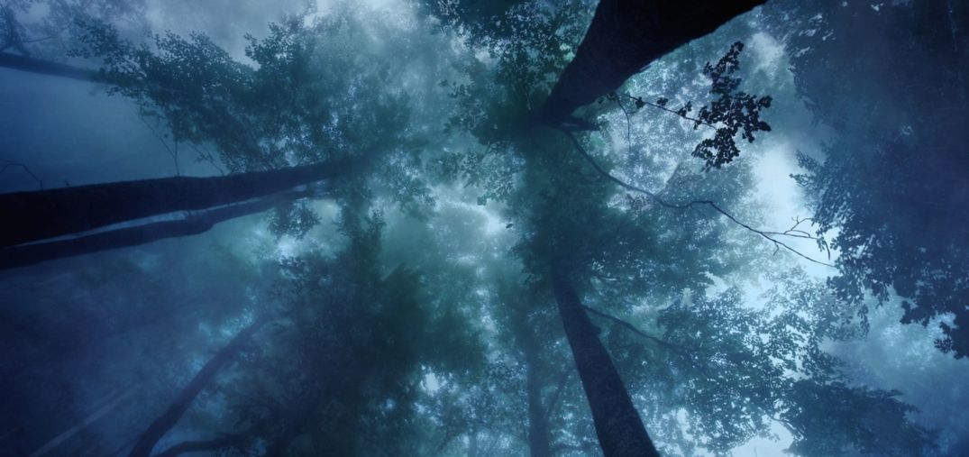 ISC_Calrec_Dolby-atmos-intro-forest_1075px
